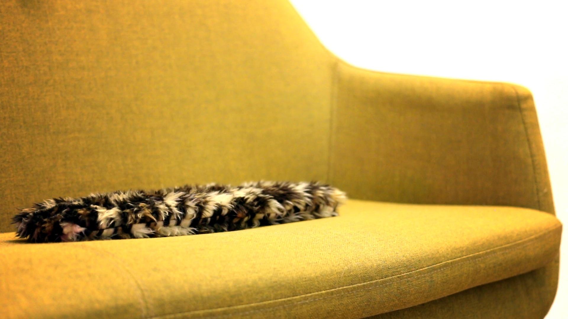 flatcat main pic, flat on sofa
